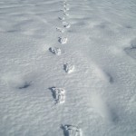 Cima San Lorenzo; impronte nella neve