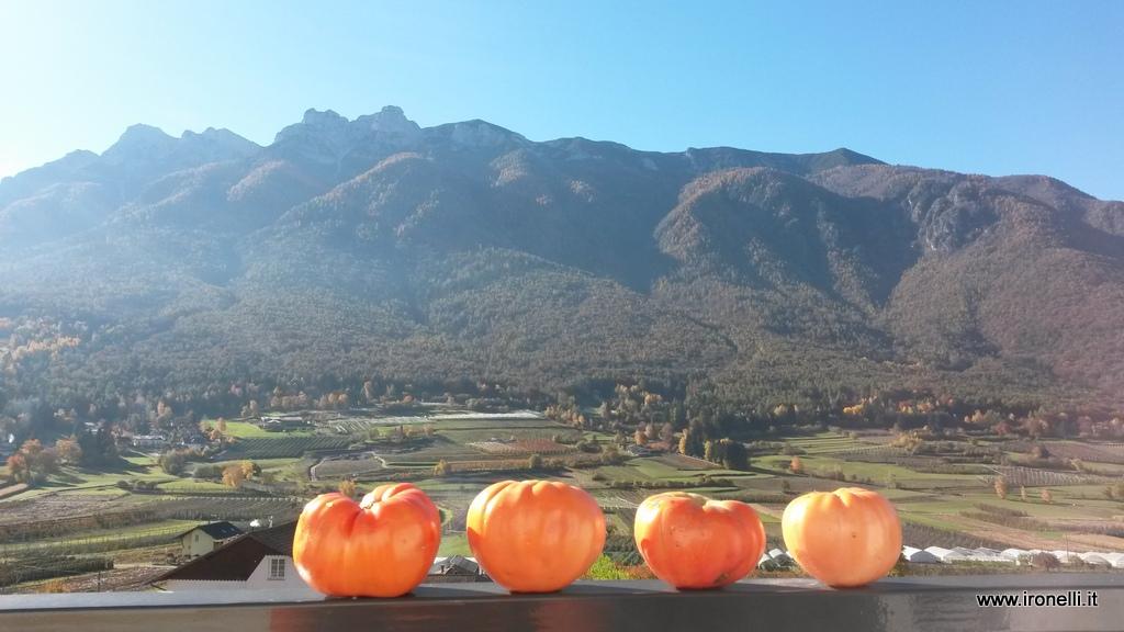 Il primo novembre pesavo fossero gli ultimi pomodori