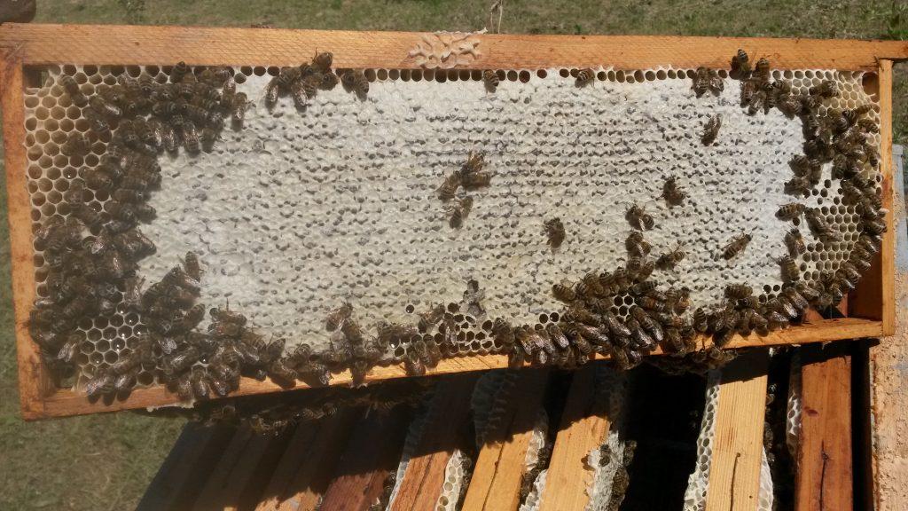 Melario pieno di miele delle api pronto per la smielatura