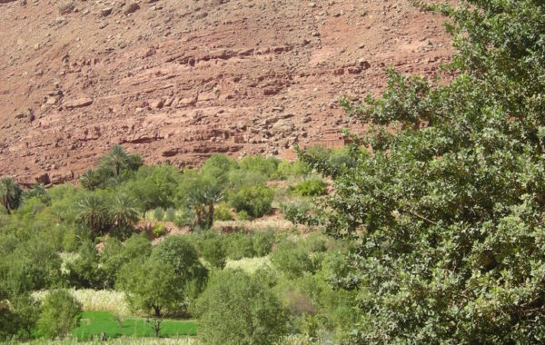 MaroccoBike-27-10-09-13-29-15