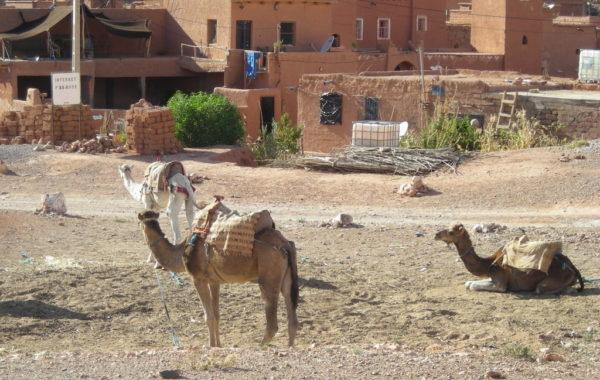 MaroccoBike-27-10-09-17-19-56-1024×768