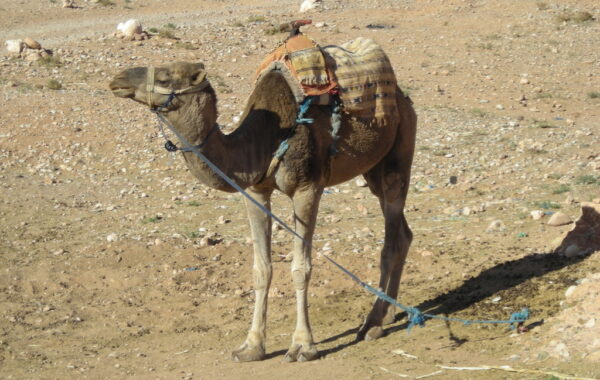 MaroccoBike-27-10-09-17-21-03
