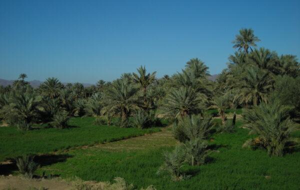 MaroccoBike-30-10-09-11-12-26