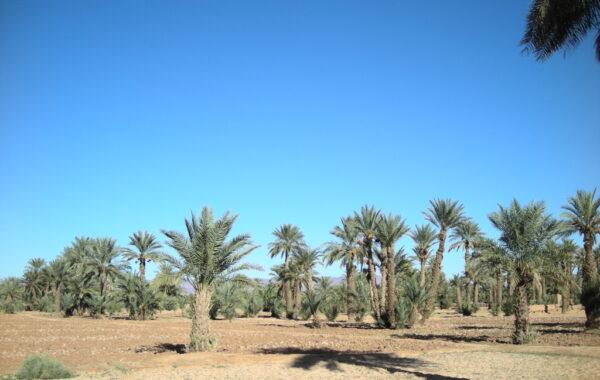 MaroccoBike-30-10-09-16-58-13
