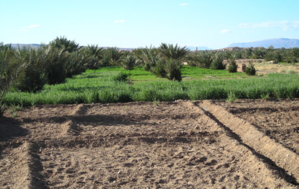 MaroccoBike-30-10-09-17-32-35