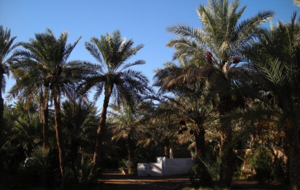 MaroccoBike-30-10-09-18-12-55